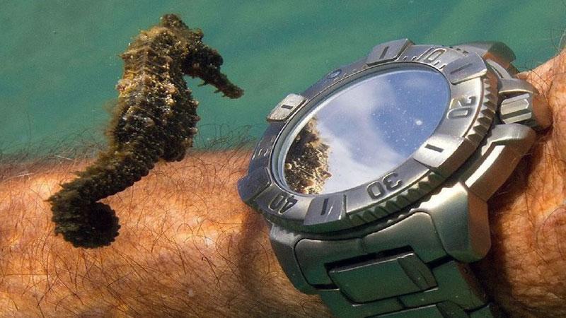 la bellezza di un orologio subacqueo